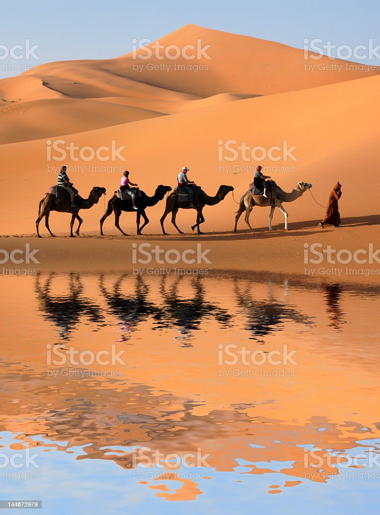 Camel caravan reflected in a Sahara Desert oasis  stock photo