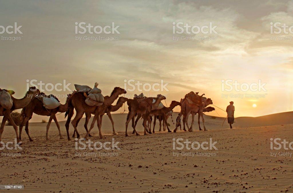 Camel Caravan Travelling Through Desert stock photo