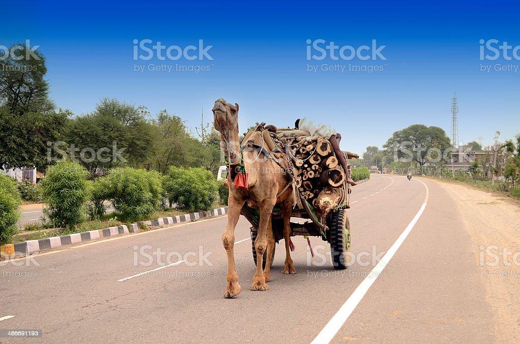 Camel cart royalty-free stock photo