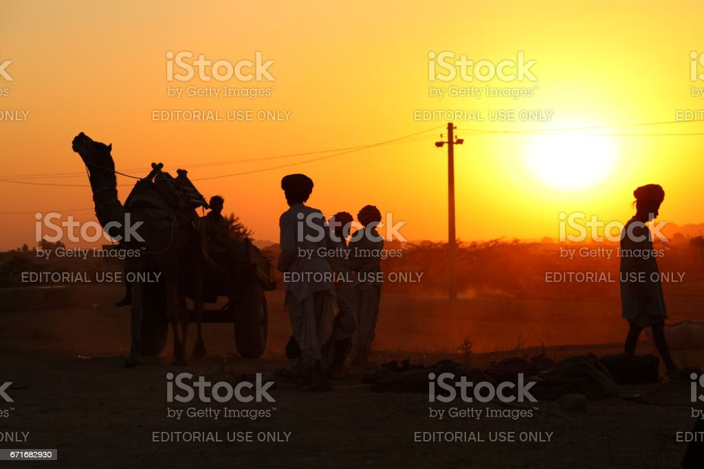 A camel driven carriage passing some men in the backdrop of sunset at Pushkar Camel Fair stock photo