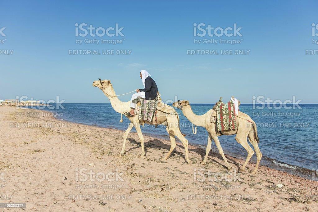 Camel driver royalty-free stock photo