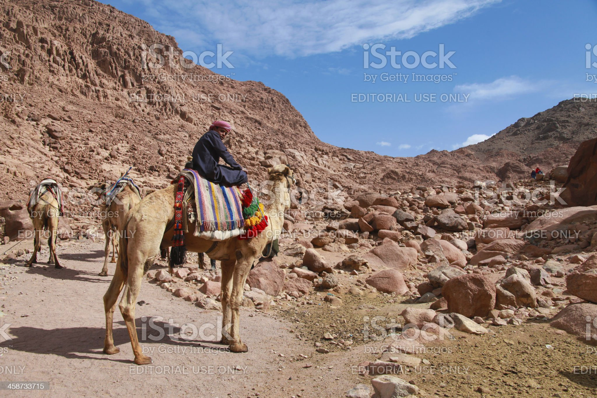 camel guide royalty-free stock photo