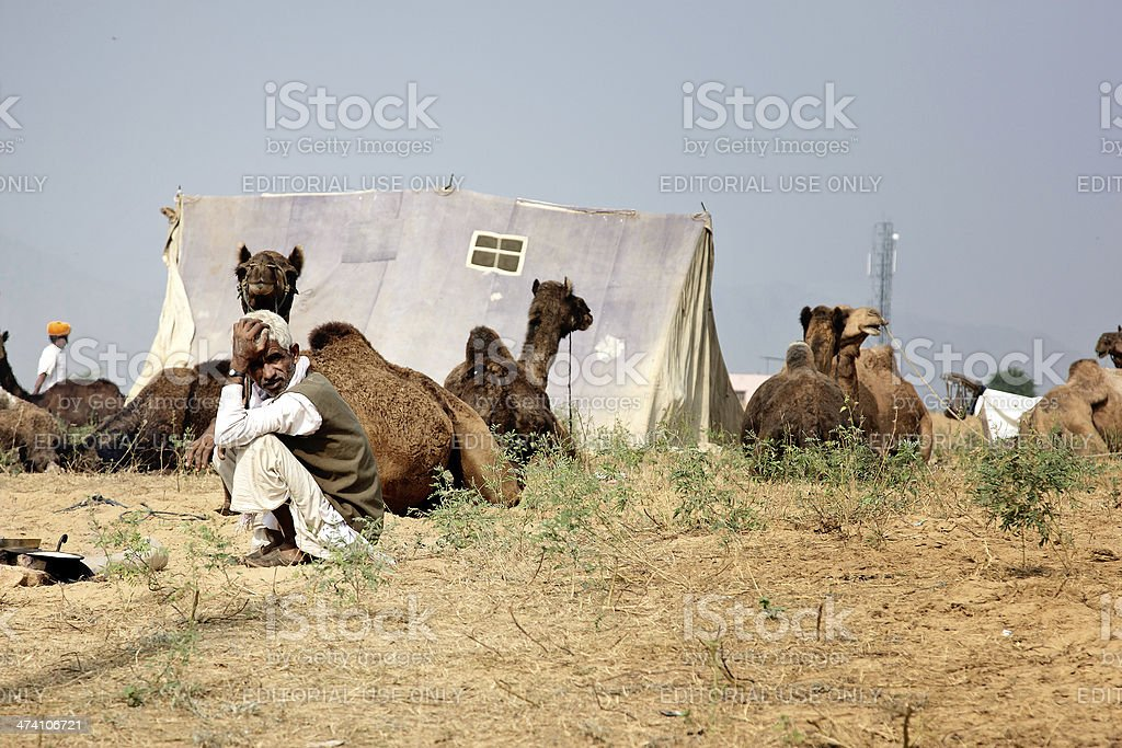 Camel herder sitting with his herd in Pushkar royalty-free stock photo