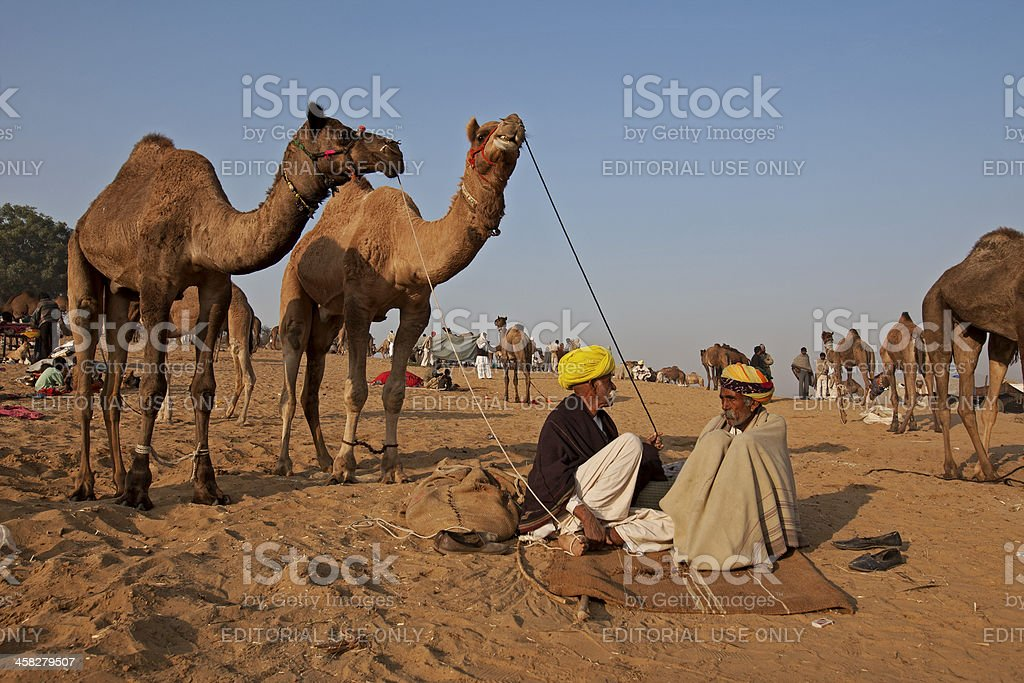 Camel Herder with his livestock stock photo