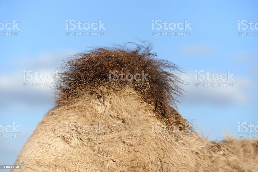 Camel hump stock photo