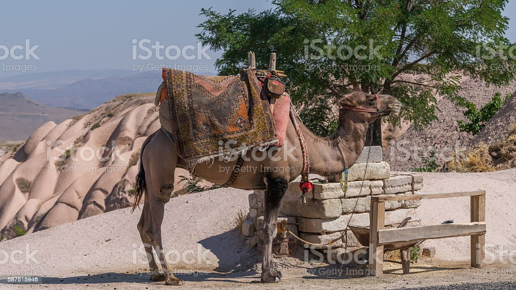 Camel in Cappadocia stock photo