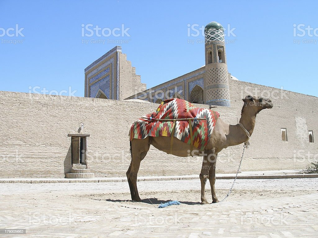 Camel in Khiva royalty-free stock photo