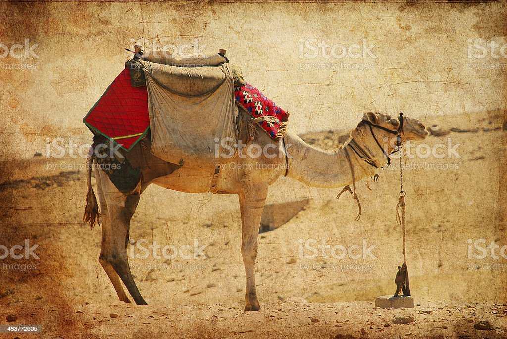 camel in the desert against a grungy background royalty-free stock photo