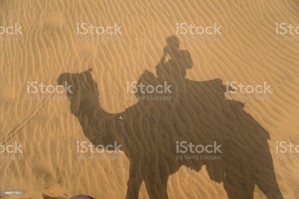 Camel in the Thar desert stock photo