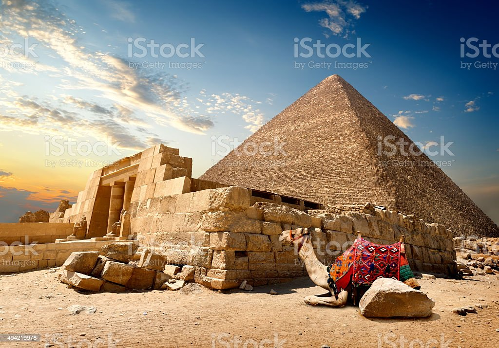 Camel near ruins stock photo