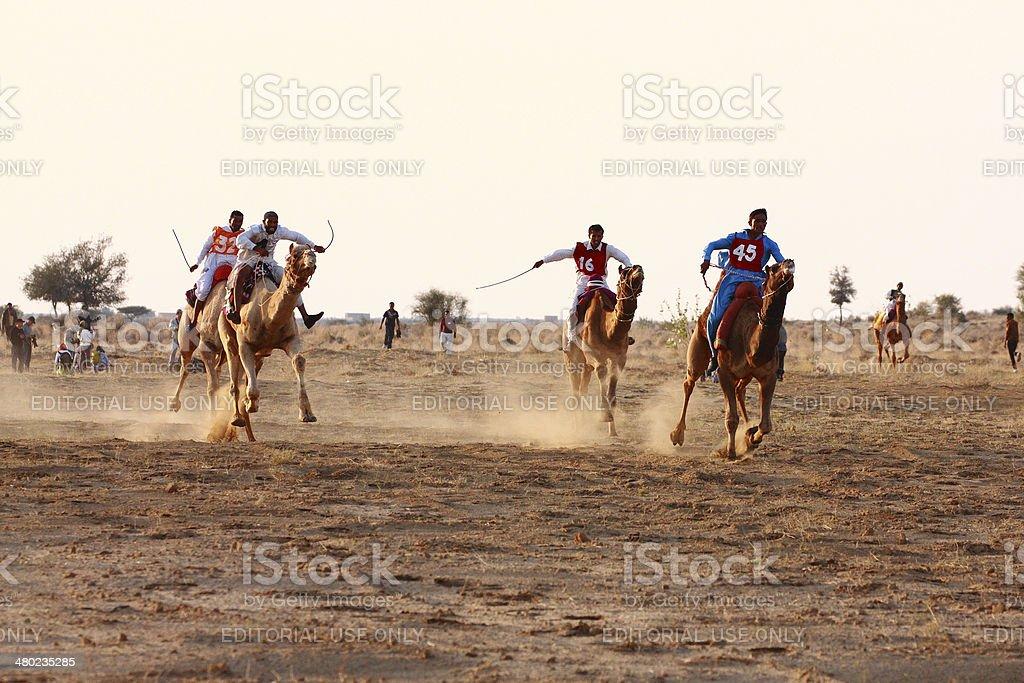 Camel racing Jaisalmer, India. stock photo