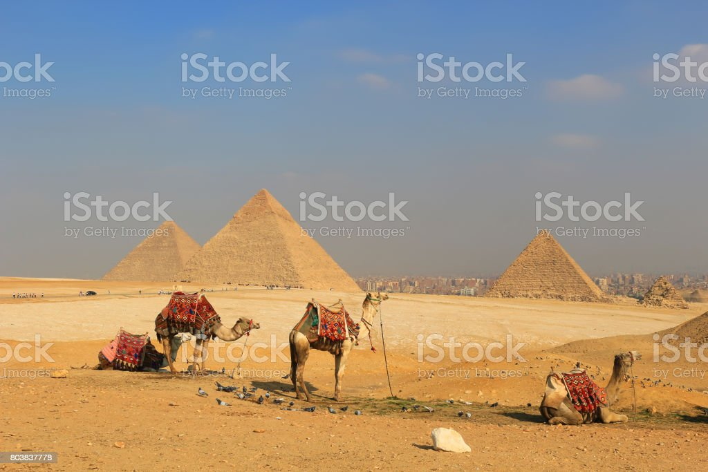 Camel relaxing at The Pyramids of Giza, man-made structures from Ancient Egypt stock photo