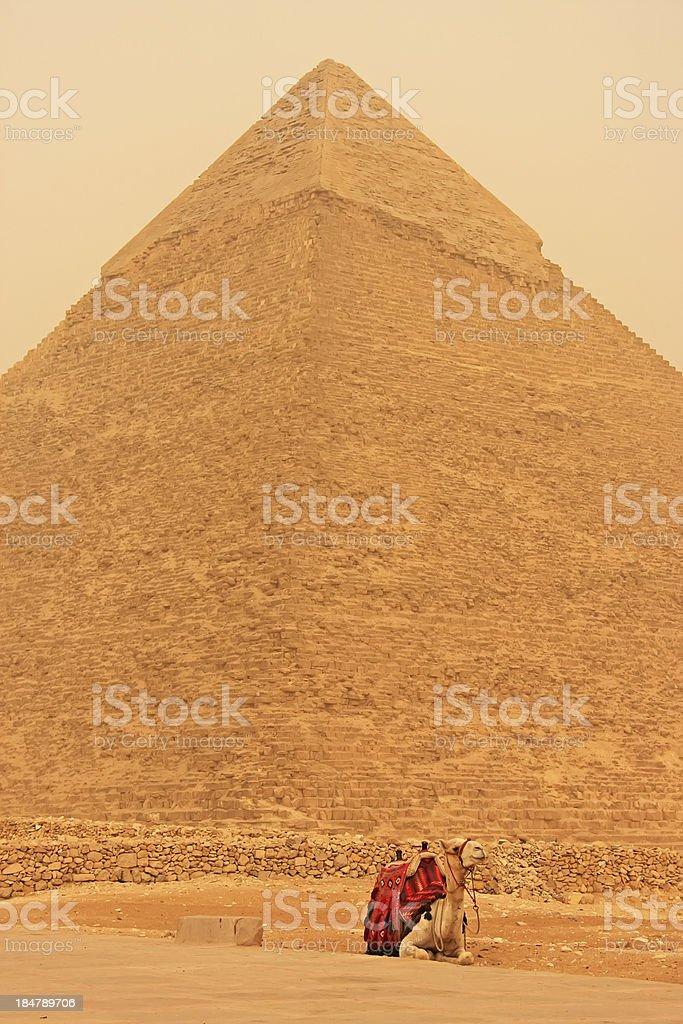 Camel resting near Pyramid of Khafre, Cairo royalty-free stock photo