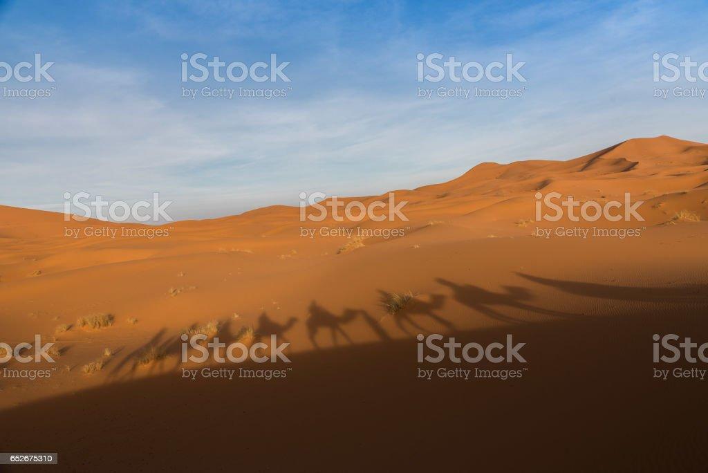 Camel ride in Sahara Desert stock photo
