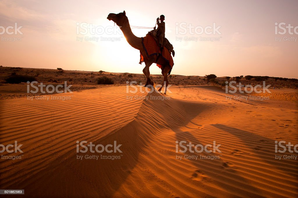 Camel Ride  in to sunset at Sand Dune stock photo