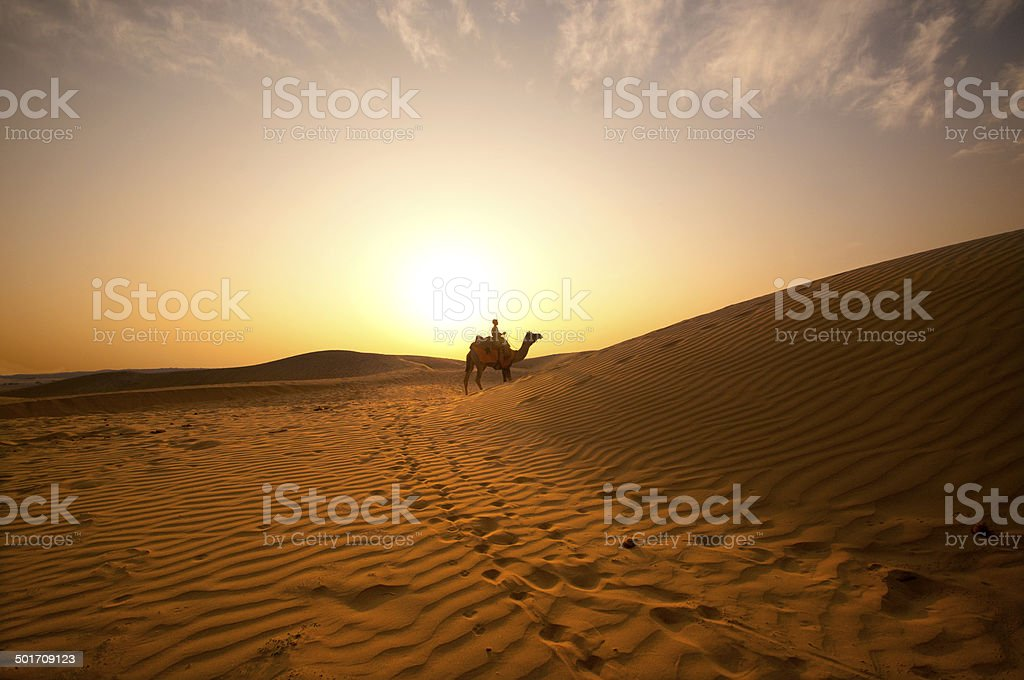 Camel Ride  in to sunset stock photo