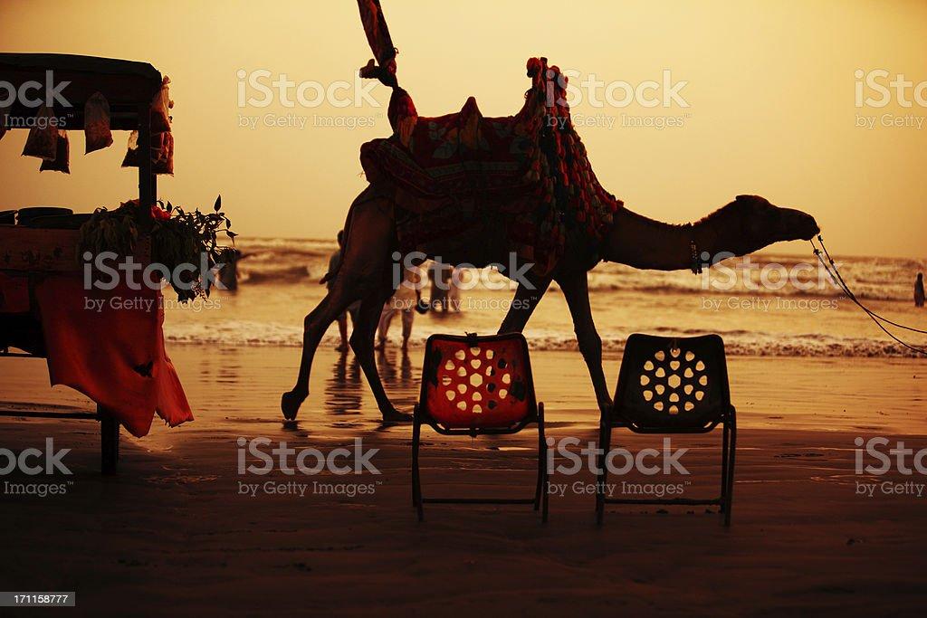 Camel Rider at Clifton Beach, Karachi - Pakistan stock photo
