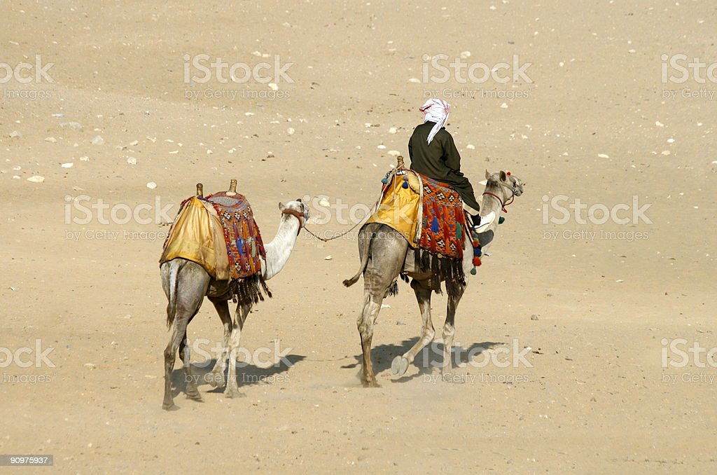 Camel rider in Cairo desert stock photo