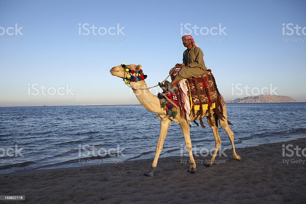 Camel riding by the sea in Sharm el Sheikh stock photo