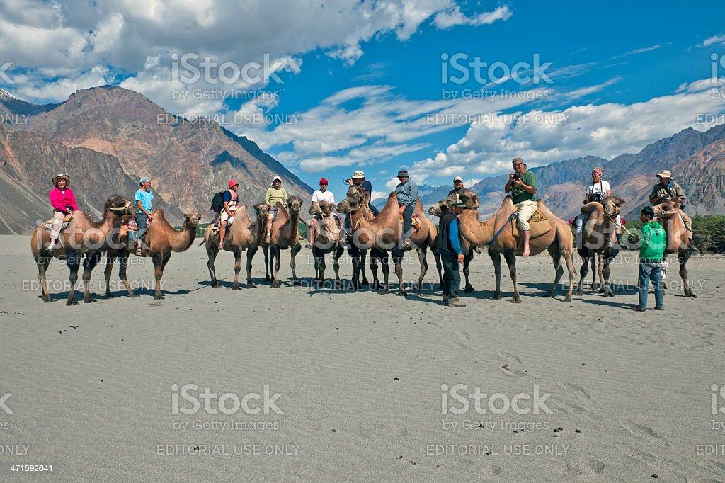 Camel Riding in Nubra Valley Desert India royalty-free stock photo