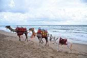 camel safari at puri sea beach, India,Asia