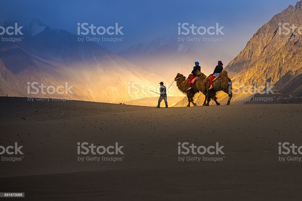 Camel safari in Nubra Valley, Ladakh, India stock photo