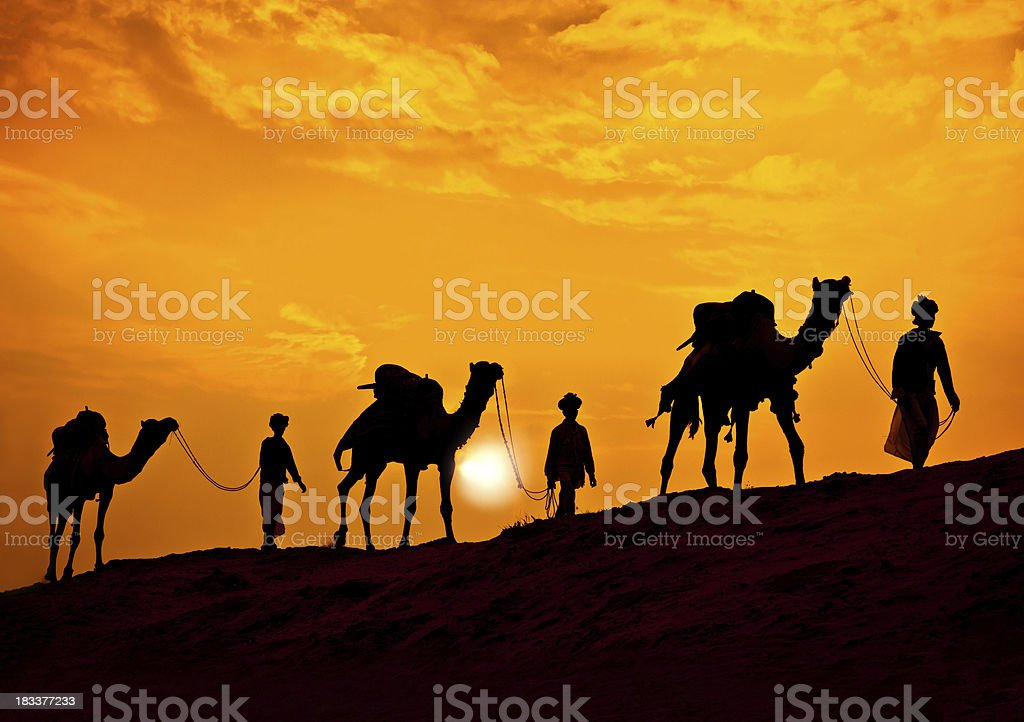 Camel Safari stock photo