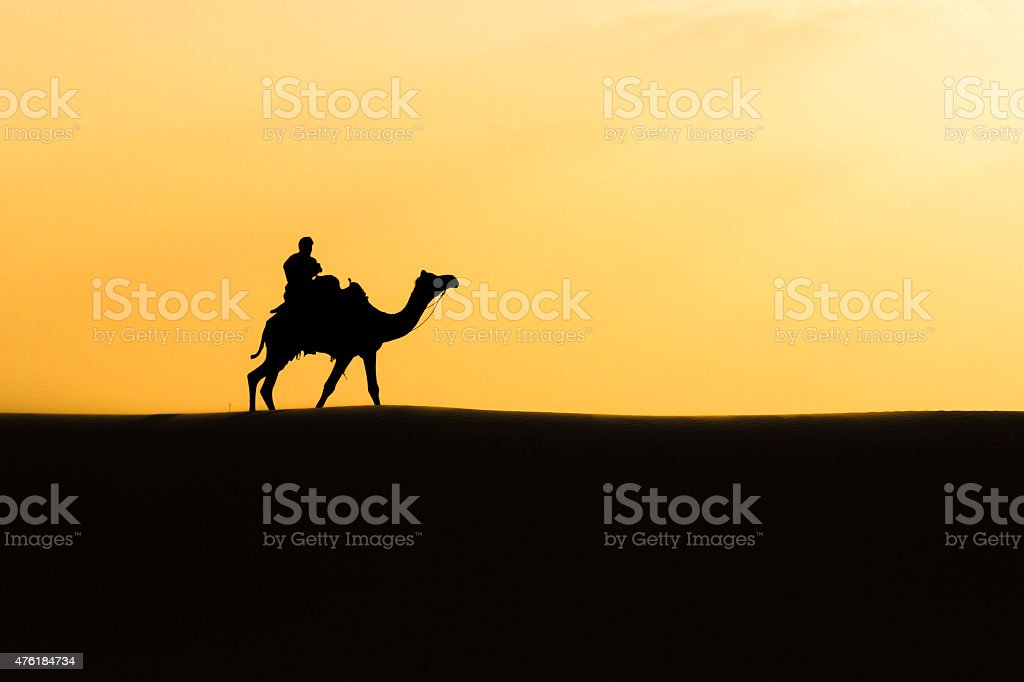 Camel Safari stock photo