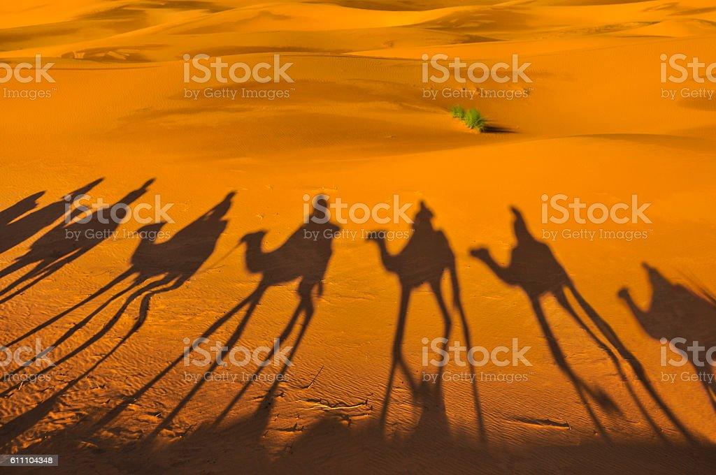 Camel Shadows stock photo
