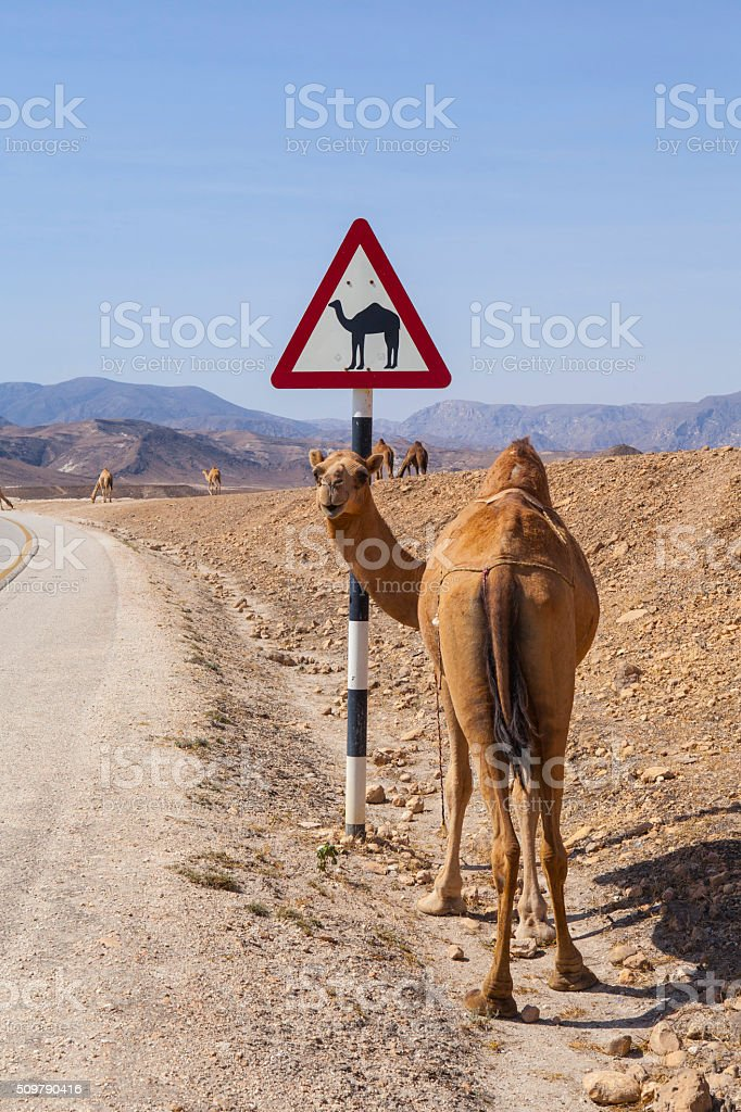 Camel sign stock photo