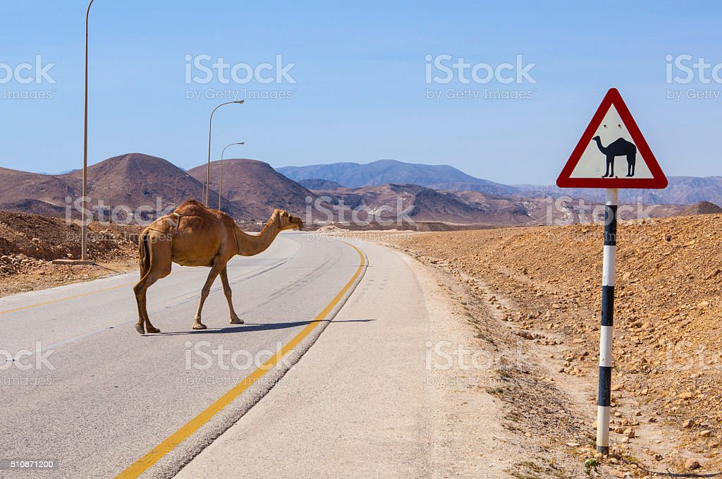 Camel sign stock photo