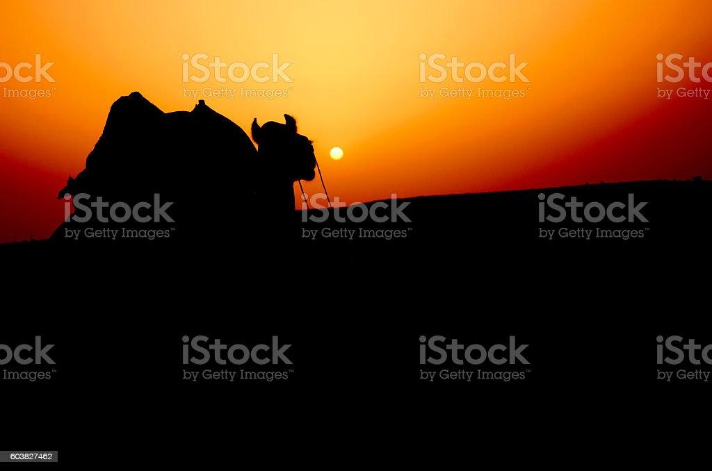 Camel Silhouette at Sam Desert, Jaisalmer, Rajasthan, India, Asia stock photo