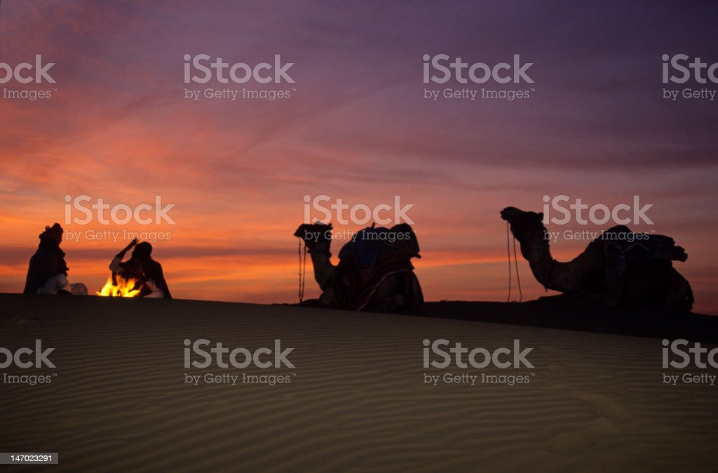 Camel silhouettes at campfire in desert sunrise stock photo