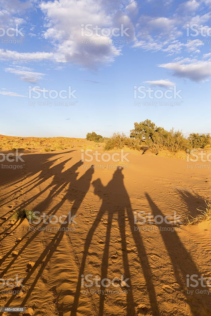 Camel silhouettes royalty-free stock photo