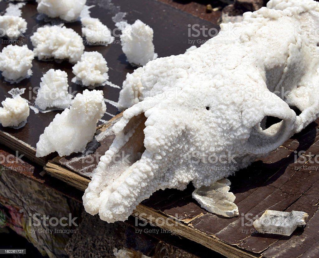 camel skull and salt stock photo
