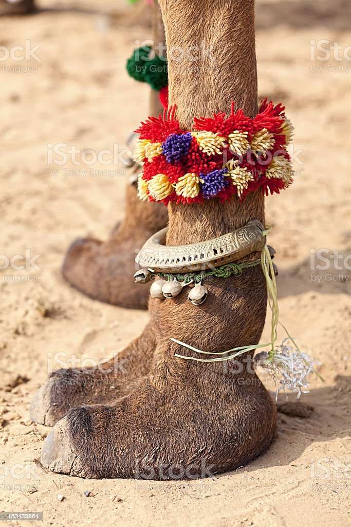Camel Toes royalty-free stock photo