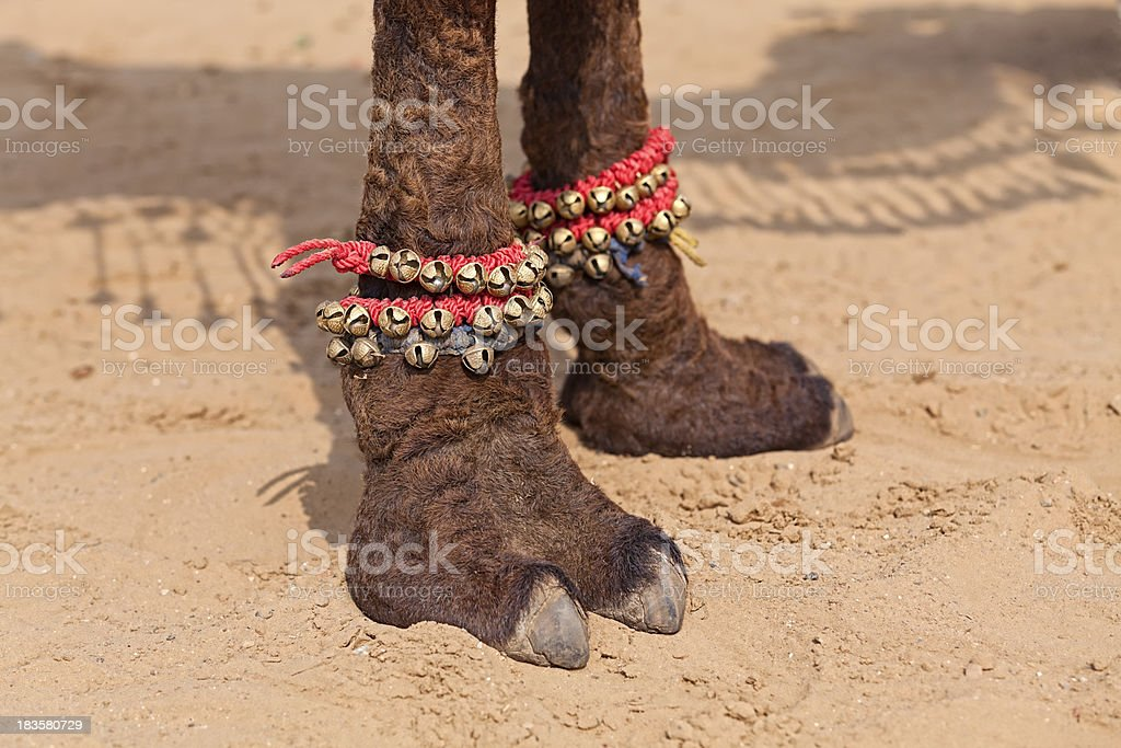 Camel Toes stock photo