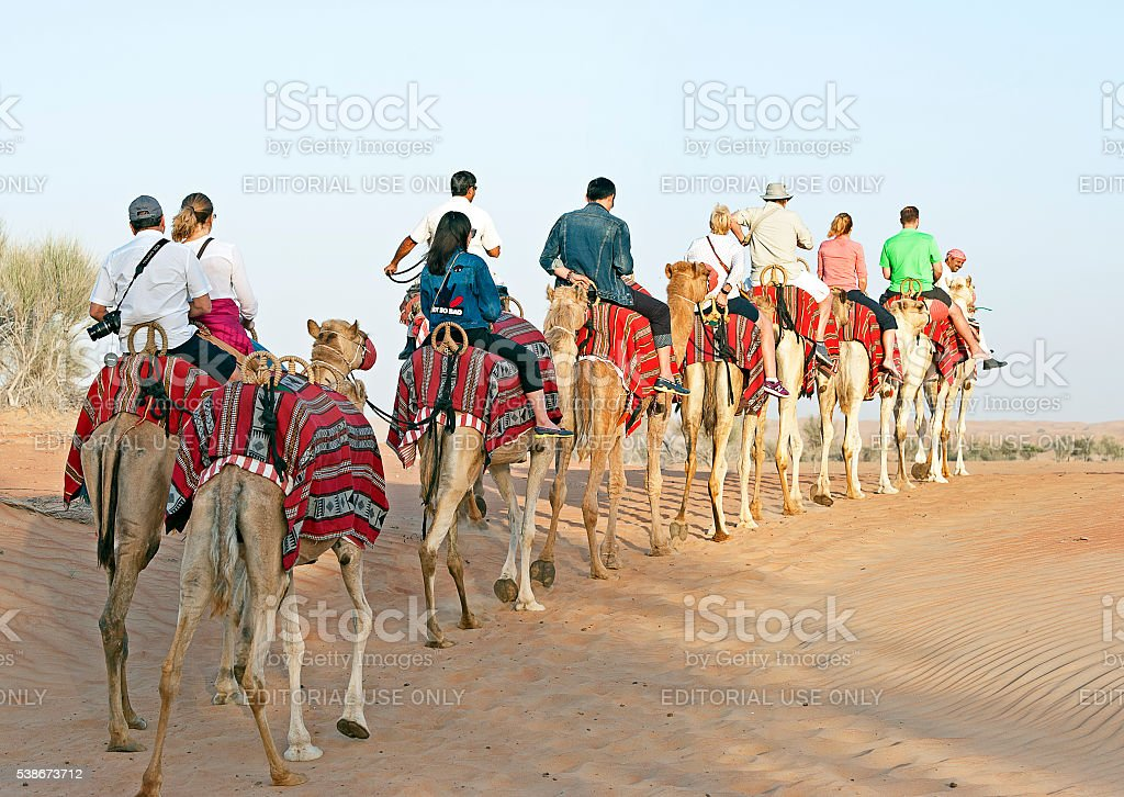 Camel Train - Arabian Desert, Dubai, UAE stock photo