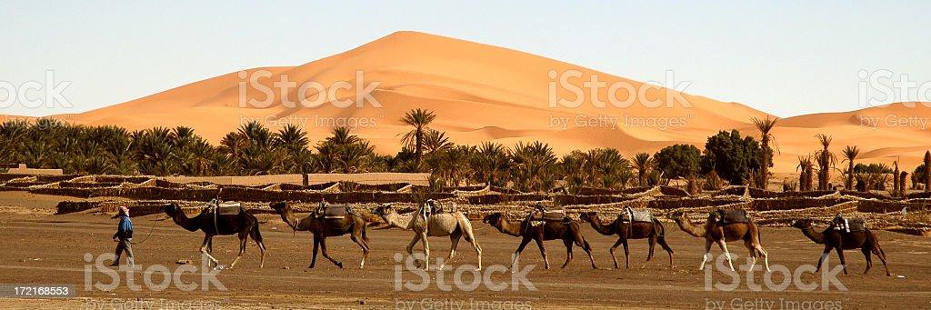 Camel train stock photo