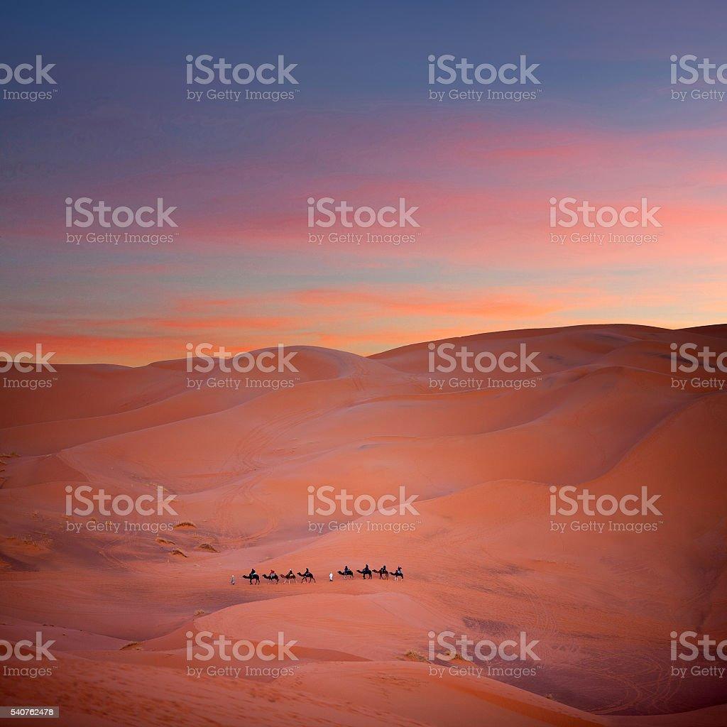 Camel trekking in Sahara, Morocco stock photo