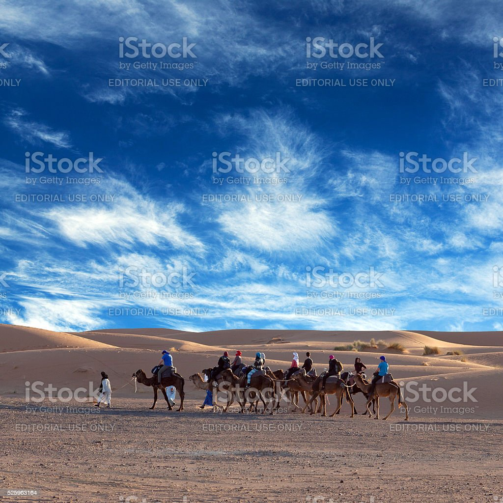 Camel trekking in Western Sahara, Morocco stock photo