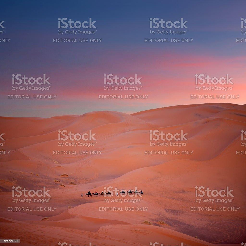 Camel trekking in Western Sahara, Morocco stock photo