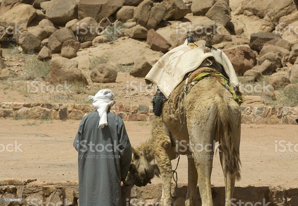 Camel Wadi Rum royalty-free stock photo