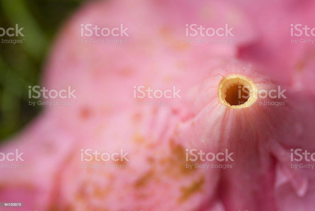 camelia in reverse stock photo