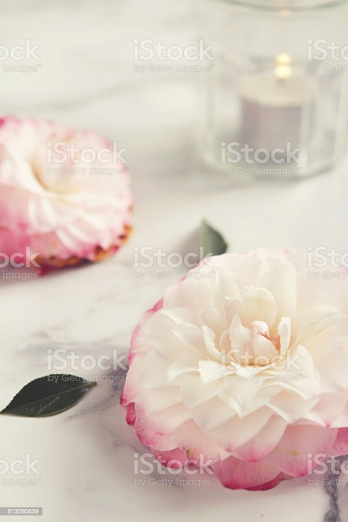 Camellia flower background with candle stock photo