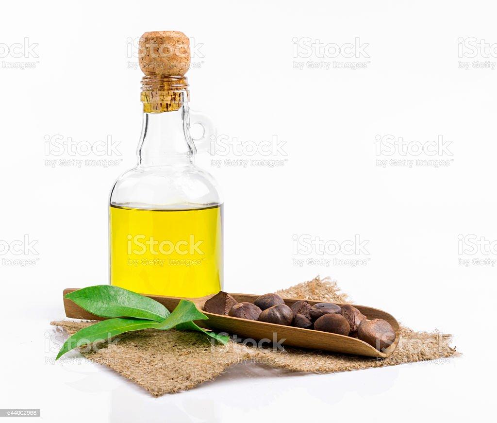 camellia oil stock photo