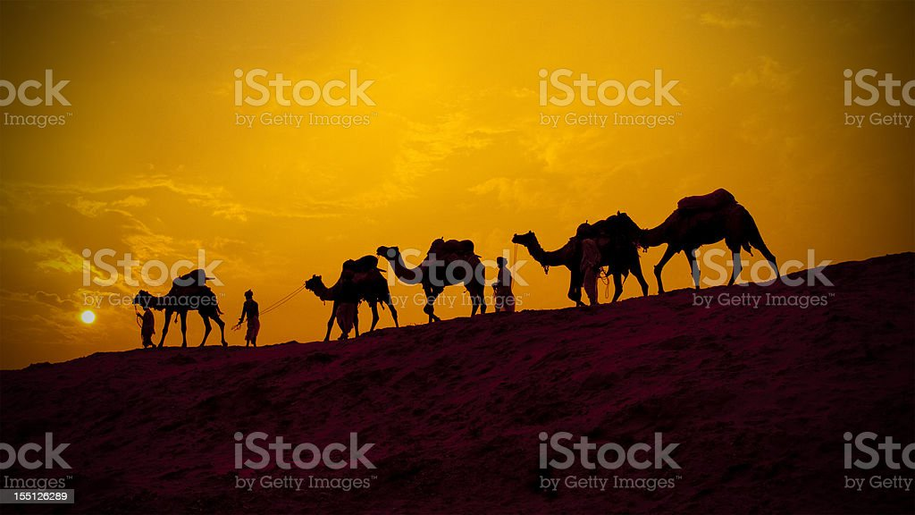 Camels and minders in silhouette, India stock photo