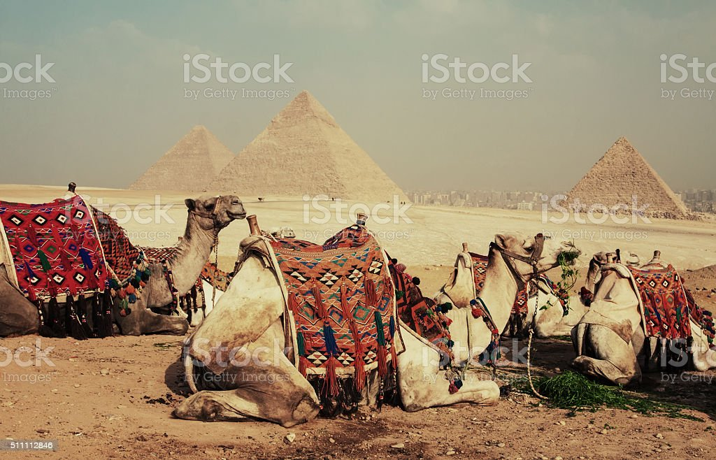 Camels and Pyramid stock photo