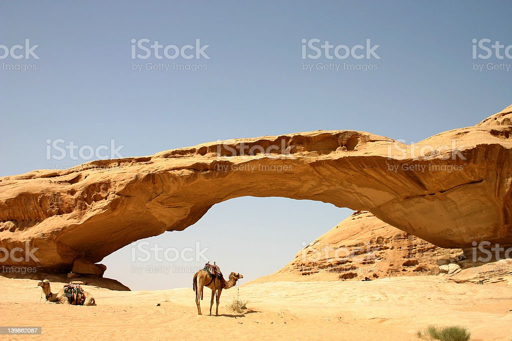 Camels and Rock Bridge stock photo