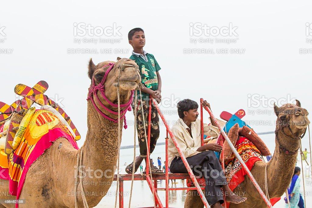 Camels at Panambur beach, Mangalore, India stock photo